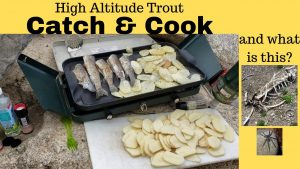 Trout Fishing Catch & Cook at Silver Lake Flat Reservoir in Utah with Powerbait Mice Tails