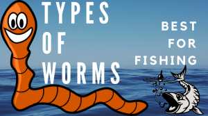 Best Types of Fishing Worms for Fishing
