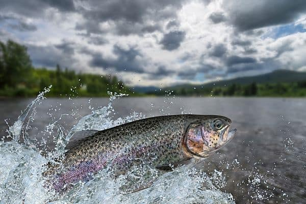 Read more about the article How To Catch Trout: Trout Fishing 101