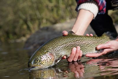Read more about the article Best Way to Catch Rainbow Trout: Top 10 Tips