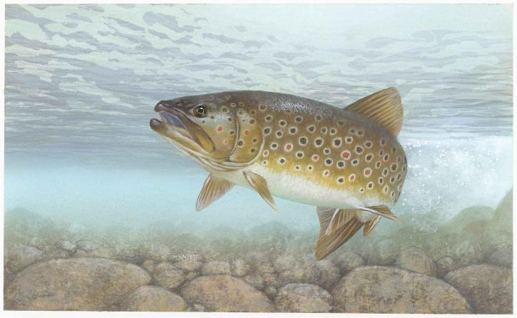 Read more about the article Different Types Of Trout And Each Species Habitat